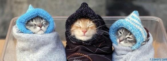 bundled-up-kittens-facebook-cover-timeline-banner-for-fb