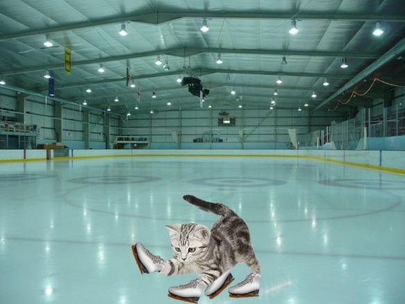 kitten skater