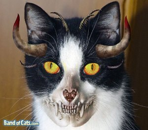 pictures-of-cats-halloween_skull-cat